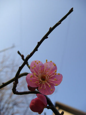 Winter's Budding Hope