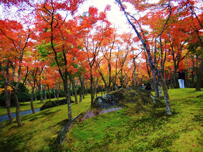 Koyo in Hakone—Autumn's Advance