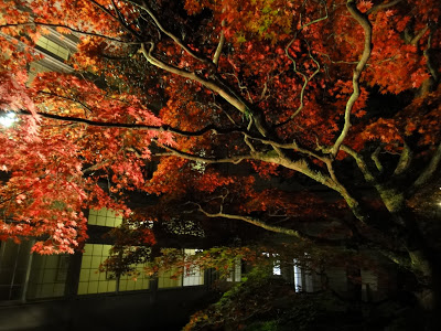 Lighting Up the Night in Hakone