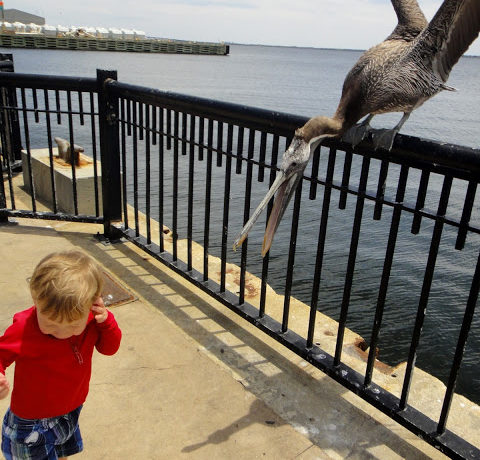 The Picky Pelican at Palafox Pier