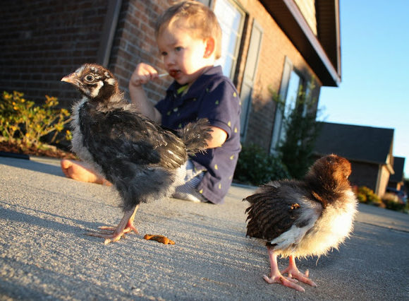 Charming Chickens!